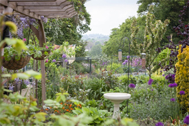 Hazel Buchanan's garden at Boxford - not taken this spring! 'The garden is just a vehicle for observing the creatures in it. I am moving away from things that just look nice. Theyve got to do a job,	Photo: Guy Jordan